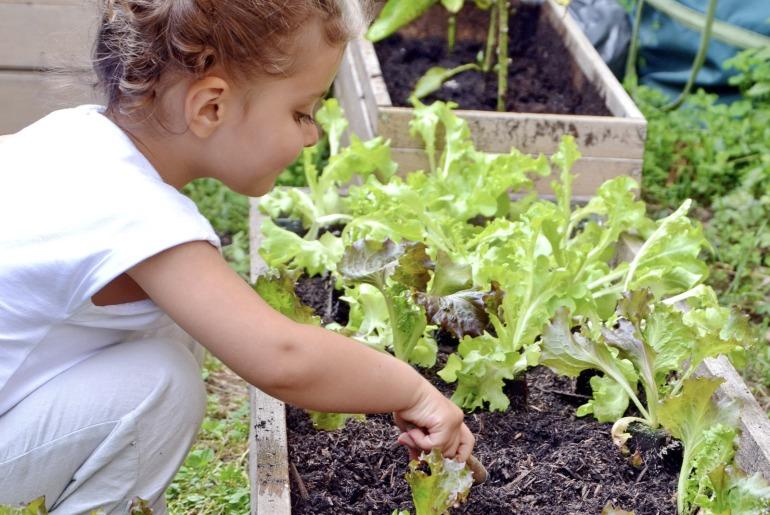 blog_summer_tree_gardening